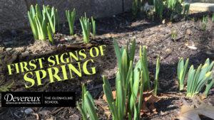 The Glenholme School Photo Spring