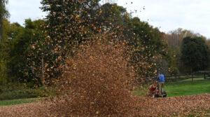 Glenholme Blowing leaves 01